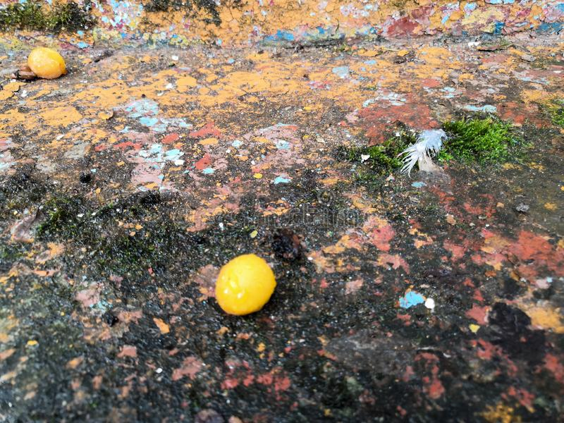 Yellow berry. Brick wall. Old flaky white paint peeling off a grungy cracked wall stock photo