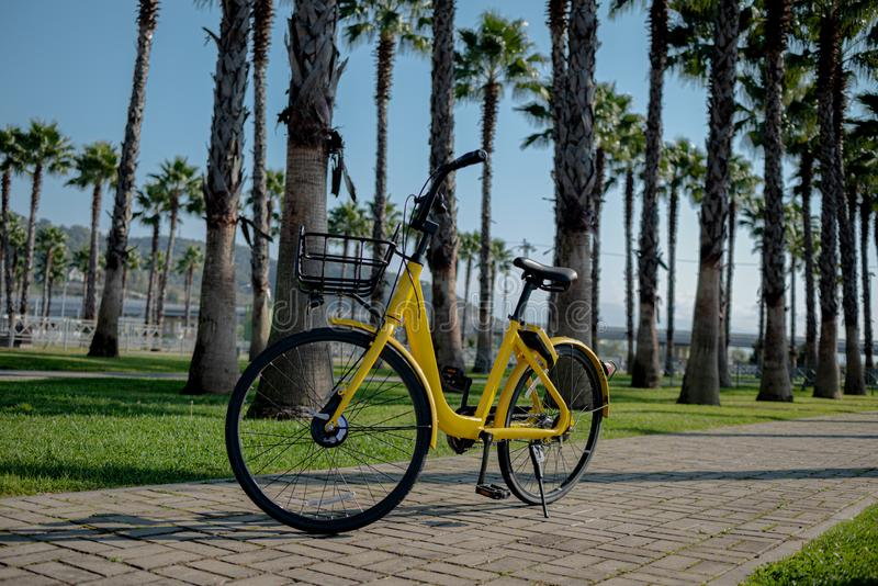 Yellow bike black wheels product palm trees the rhythm of the summer sun heat promotional photo stock image