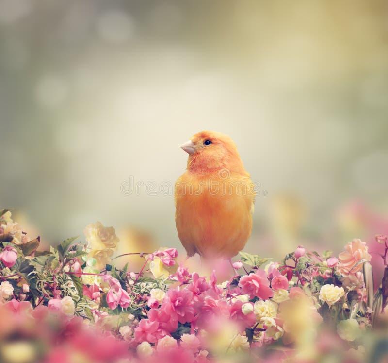 Yellow Bird. Perches In Flower Garden royalty free stock image