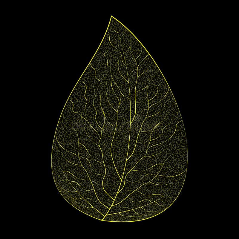 Vector illustration of a yellow skeleton leaf on a black background. stock images