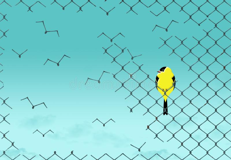 A yellow and black bird. Resting on a chainlink fence watches the fence disintegrated into flying birds that look like seagulls. The wire shape looks like royalty free illustration