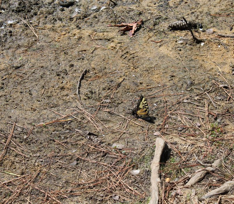 Yellow and black butterfly landed stock image