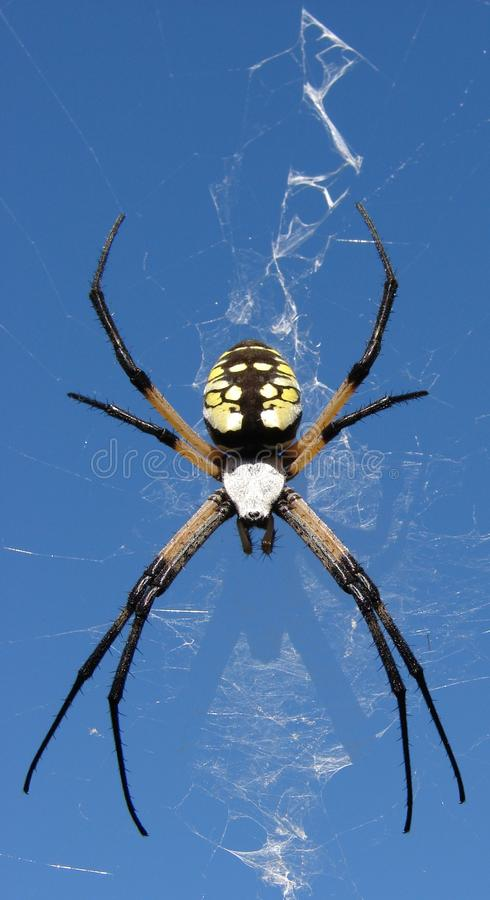 Yellow Black Spider Shadow. Yellow, Black & White Spider with shadow cast on spider web ~ caught in the afternoon light stock photography