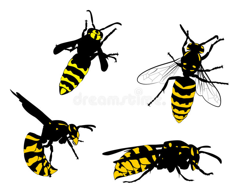 Yellow and black wasps collection. Illustration with wasps collection isolated on white background stock illustration