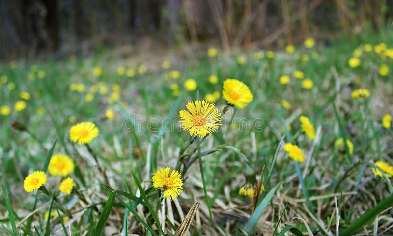 Yellow Blooms Free Public Domain Cc0 Image
