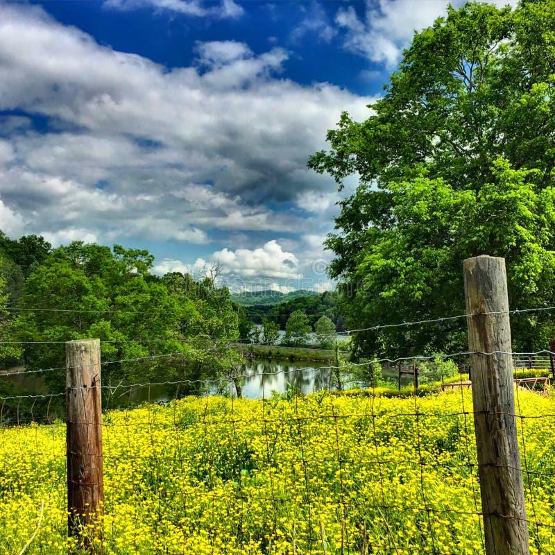 Yellow blooms. Near Cordell Hull Lake stock photo