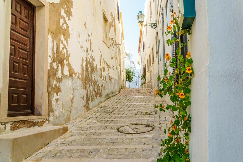 Yellow blossoms in dreary alley in Portugal royalty free stock images