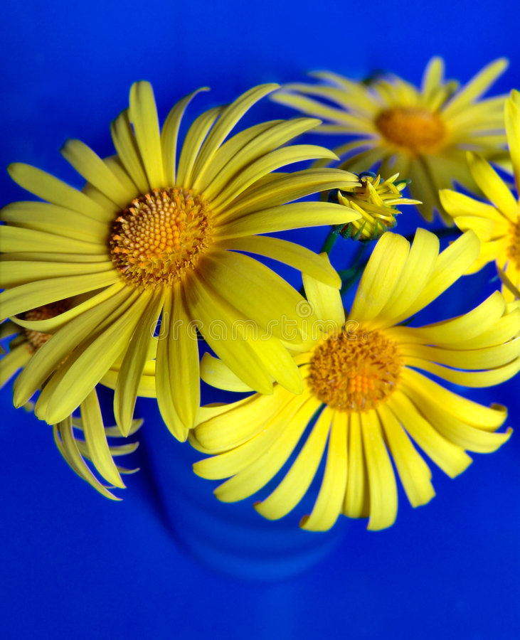Download Yellow & Blue stock photo. Image of colorful, cheerful - 467576