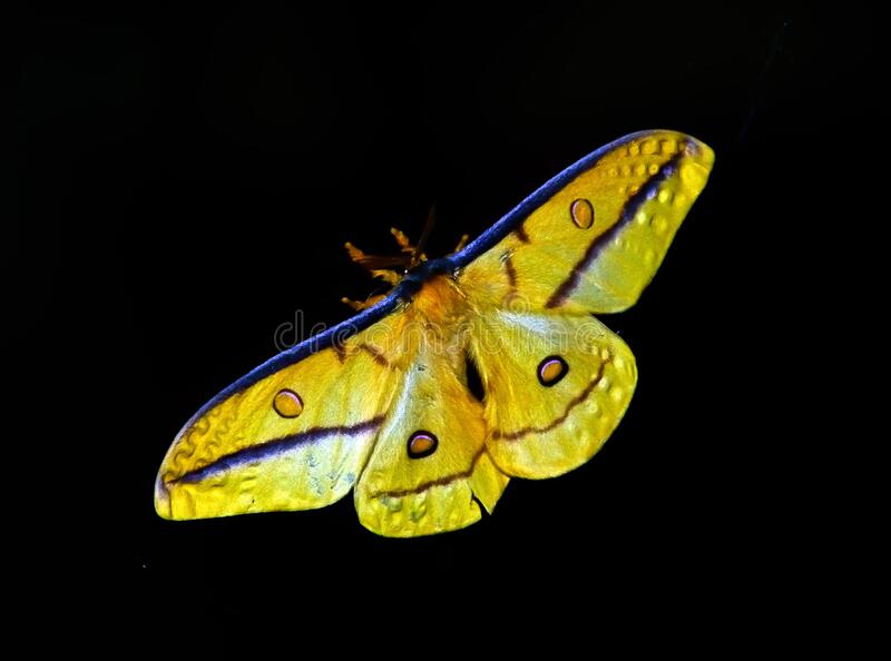 Yellow And Blue Butterfly Free Public Domain Cc0 Image