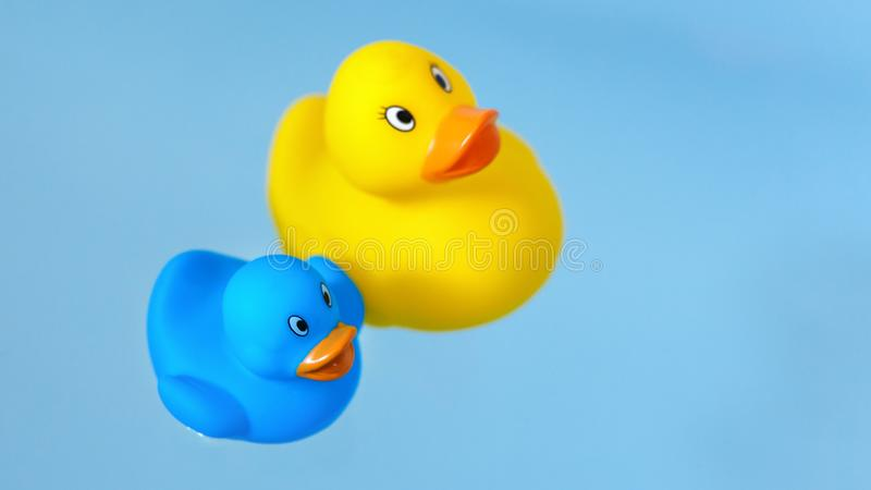Yellow and blue rubber bath ducks in water. royalty free stock images