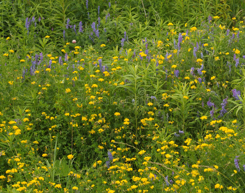 Download Yellow And Blue Wildflowers Stock Image - Image: 10200295