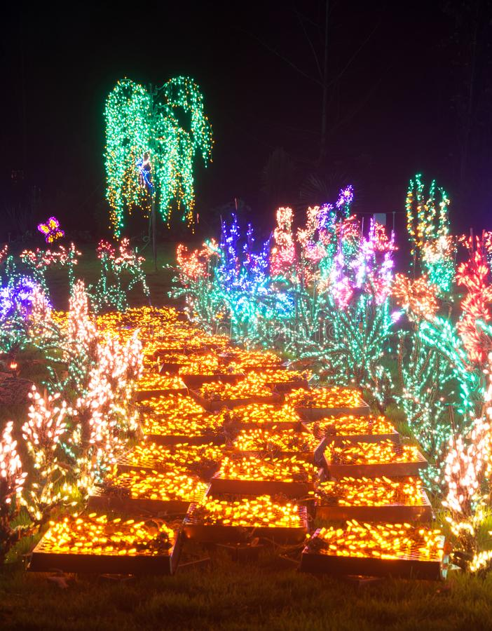 Free Yellow Brick Road Flower Christmas Lights At Night Stock Photo - 133867800