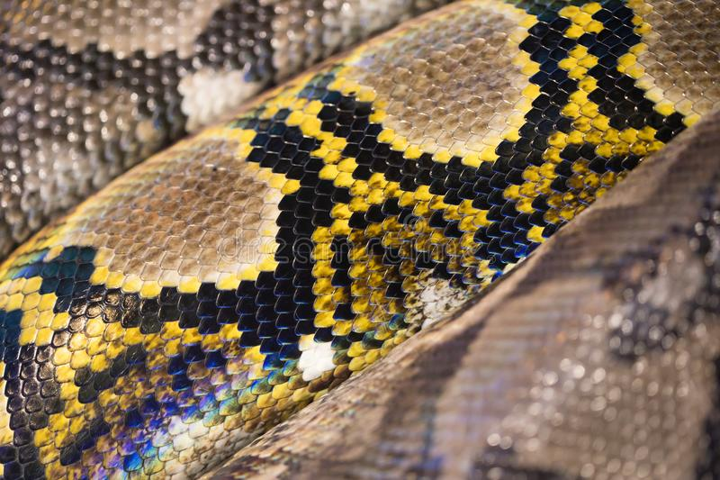 Yellow, brown, and black snake texture. Yellow, brown, and black snake beautiful texture stock image