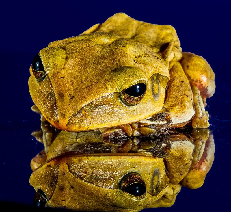 Yellow And Brown Frog Free Public Domain Cc0 Image