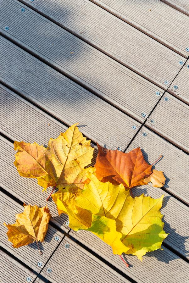 Yellow, Brown, Orange and Green dry autumn leaves on wooden floor. stock photography