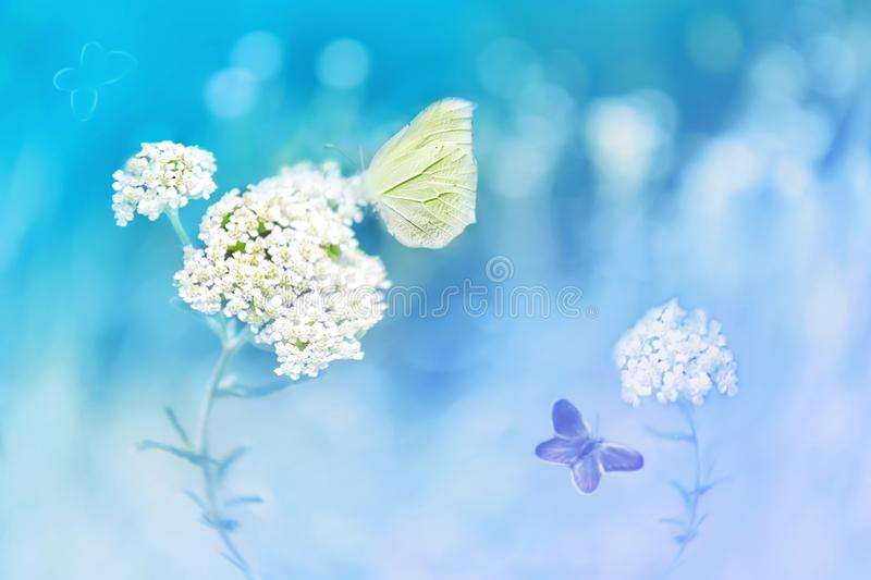 Yellow butterflies on the white flower against a background of wild nature in blue tones. Artistic image. stock photos