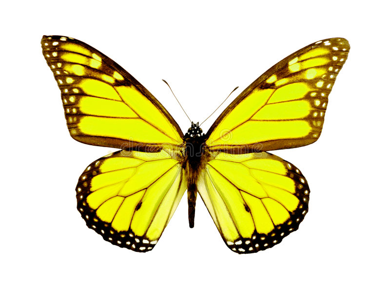Yellow Butterfly. 3D Butterfly