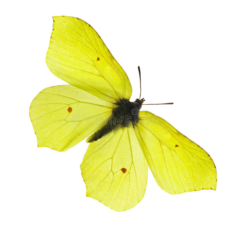 Yellow butterfly royalty free stock photography