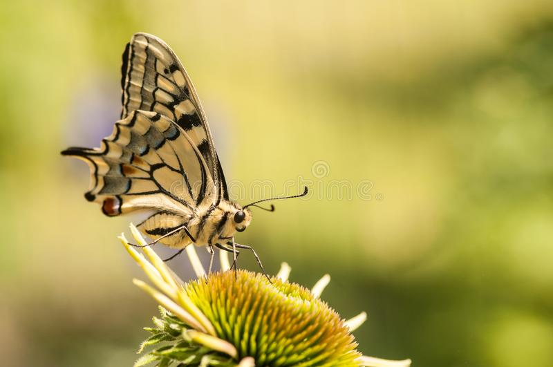 Butterfly yellow with flower stock images