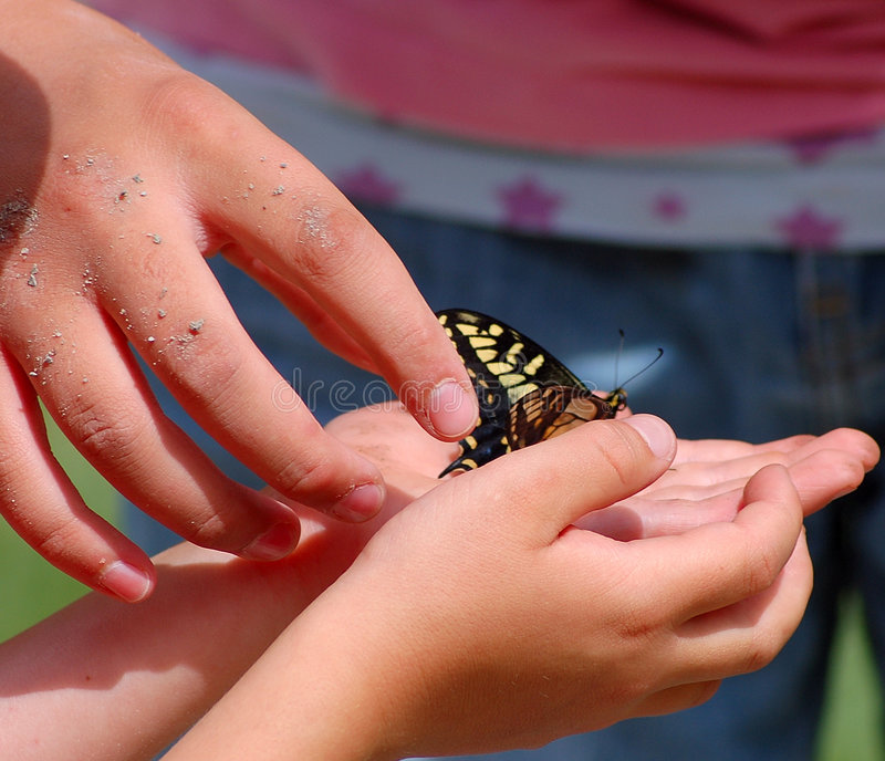 Western Tiger Swallowtail butterfly in hand royalty free stock image