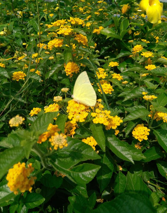 Yellow butterfly sitting in flower, plants bush in the garden photography. Wild, life, nature, park, outdoors, plantation, day, sunlight, green, leaves, grass stock photos