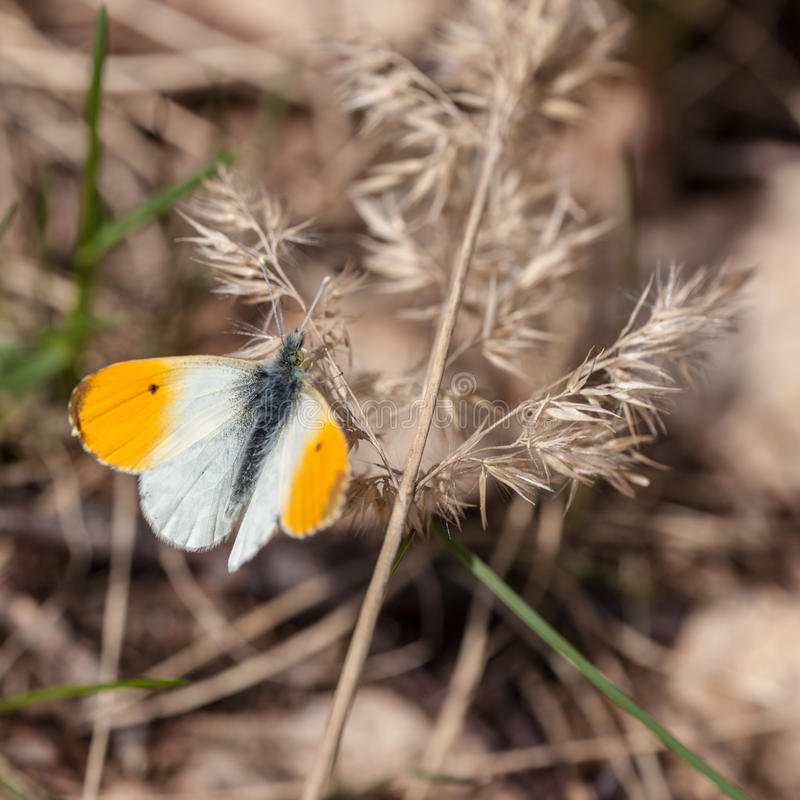 Download Yellow butterfly stock photo. Image of white, green, closeup - 39302156