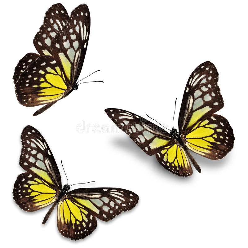 Yellow butterfly stock illustration