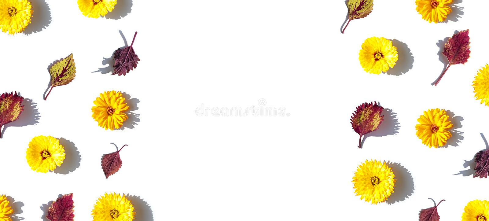 Yellow calendula flowers and autumn leaves concept frame on the bright sunny background. Top view banner template. stock image