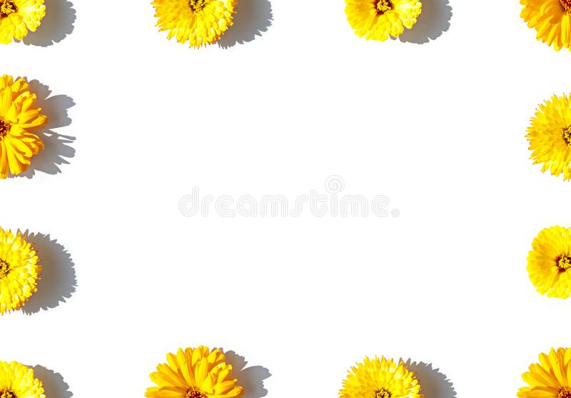 Yellow calendula flowers concept frame on the bright sunny background. stock image