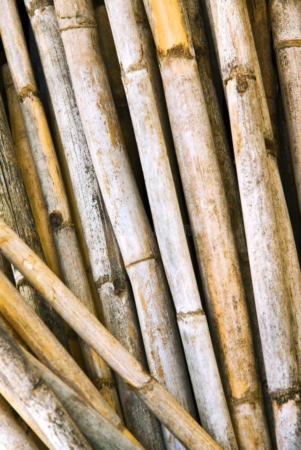Download Yellow canes stock photo. Image of cracks, bamboo, natural - 16511844