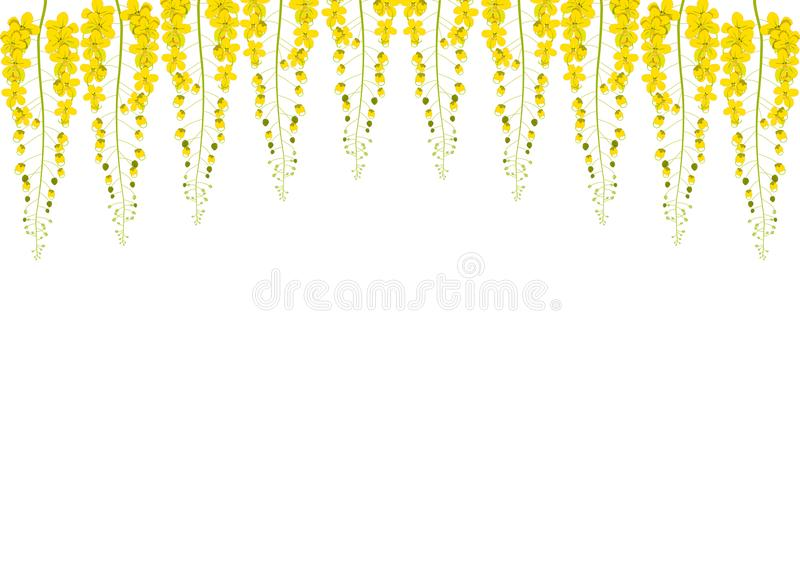 Yellow Cassia Fistula - Golden Shower Flower on White Background with copy space.  vector illustration
