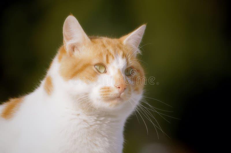 Download Yellow cat stock photo. Image of soft, beautiful, style - 29296442