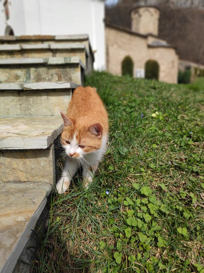Yellow cat and clover stock photography