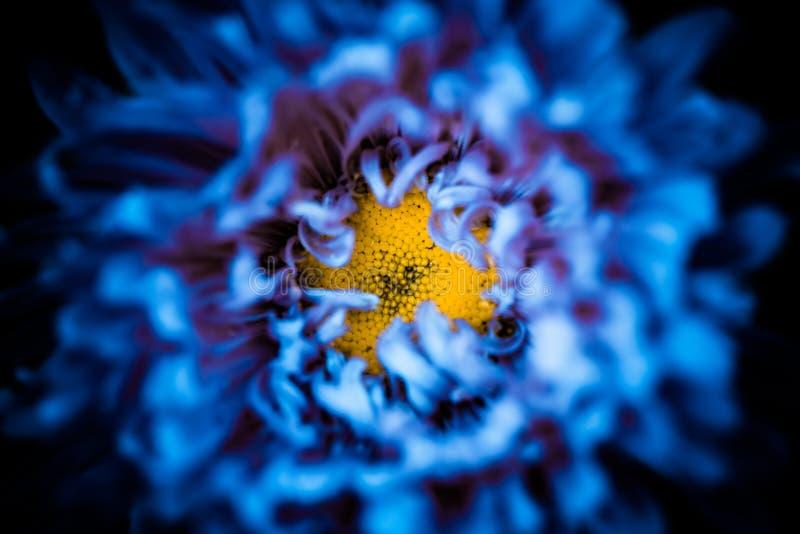 Inside abstract blue flower. Yellow center inside abstract blue flower leafs background stock image