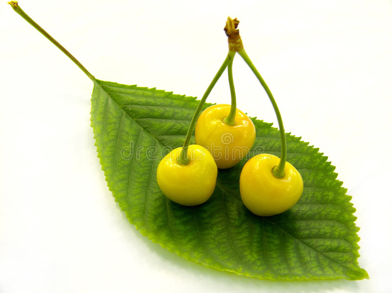 Yellow cherry royalty free stock photography