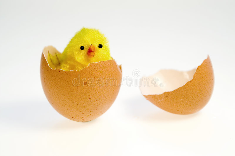 Yellow chicken royalty free stock image