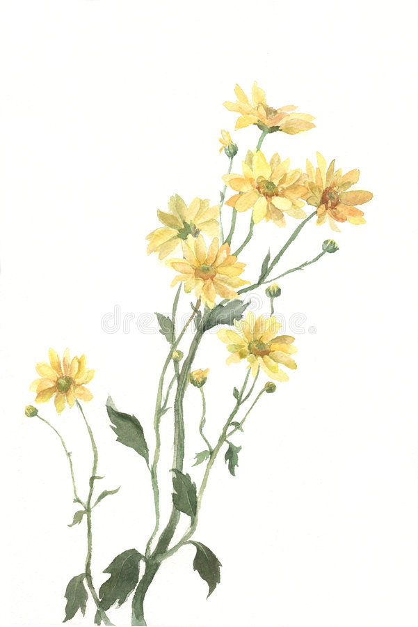 Free Yellow Chrysanthemum Flowers Watercolor Painting Stock Photos - 4363373
