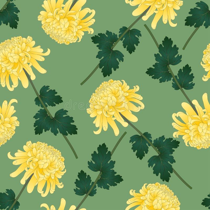 Yellow Chrysanthemum, Kiku Japanese Flower on Green Olive Background. Vector Illustration.  vector illustration