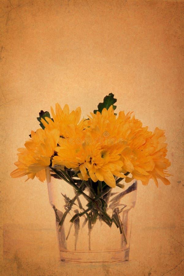 Yellow Chrysanthemum on vintage grunge paper. Background vector illustration