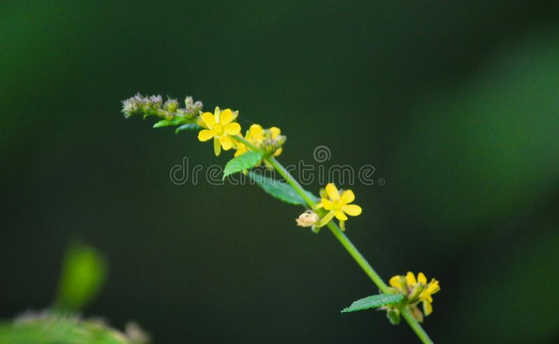Yellow color beautiful small flowers. Yellow color small flowers image. This image quality is high stock image