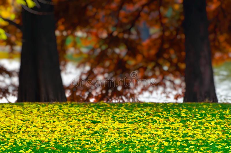Yellow colorful autumn leaves fallen on a green grass lawn, over a heavy blurred bokeh background of red trees and a lake. Vibrant royalty free stock images