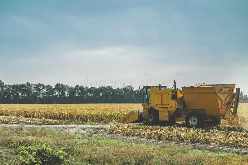 Yellow combine harvester harvests ripe corn. Agriculture aerial view royalty free stock photo