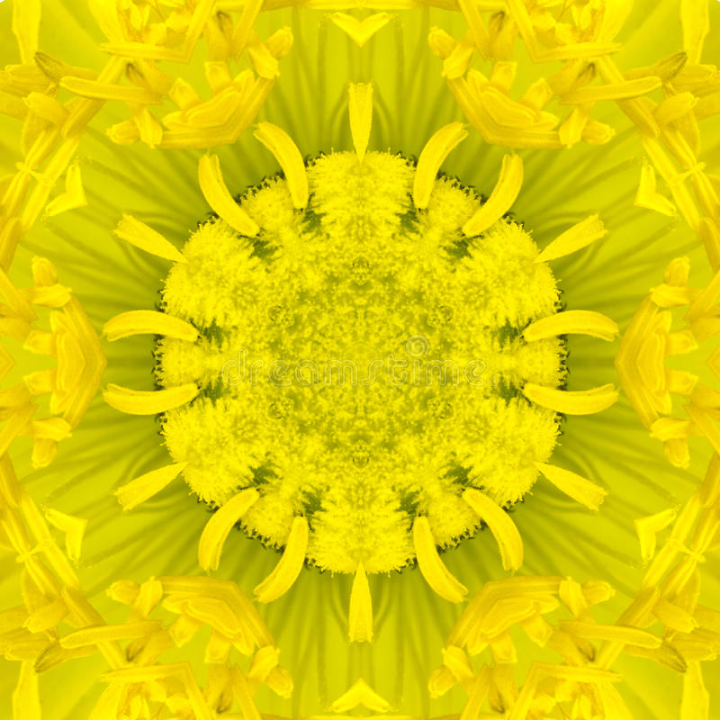 Yellow Concentric Flower Center. Mandala Kaleidoscopic design. Yellow Concentric Flower Center Macro Close-up. Mandala Kaleidoscopic design royalty free stock photography