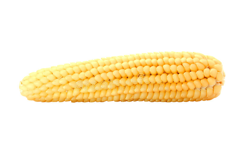 Download Yellow corn stock image. Image of indian, nutrition, harvest - 20701221
