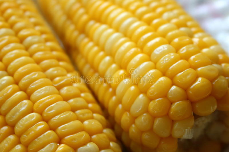 A yellow corn on a dish. royalty free stock photo