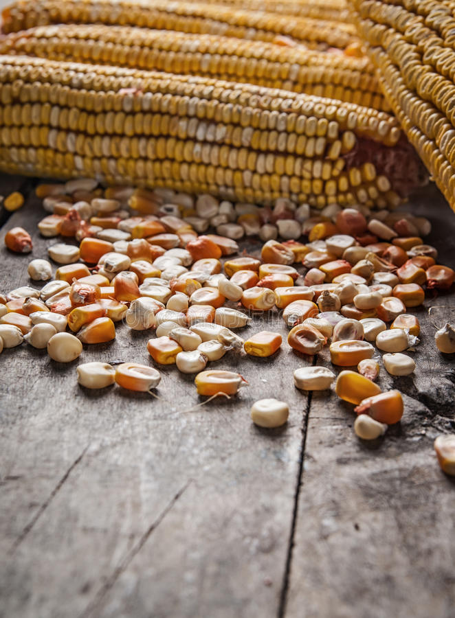 Yellow corn kernels. On a wooden table royalty free stock photography