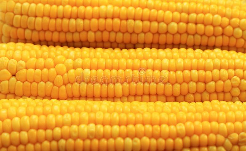 Yellow corns as background. Corn vegetable pattern. Background of bulk of yellow corn grains. Shiny corns. Sweet corn ears stock photos