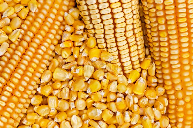 Corn texture. royalty free stock images