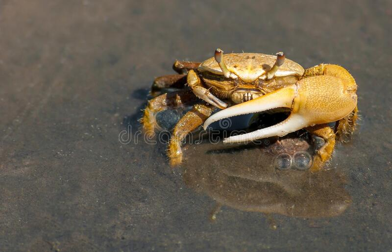 Yellow Crab On Gray Sand During Daytime Free Public Domain Cc0 Image