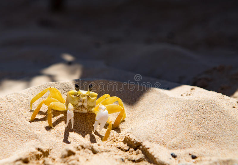 Yellow crab royalty free stock photography
